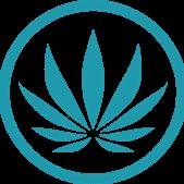 Choom Cannabis -...